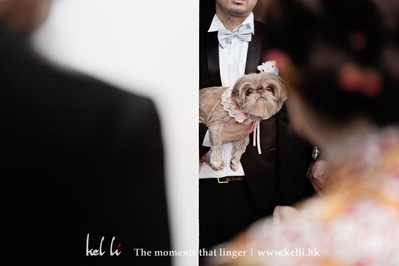 從狗狗的眼神看到:應承我,嫁左出去都唔可以唔要我