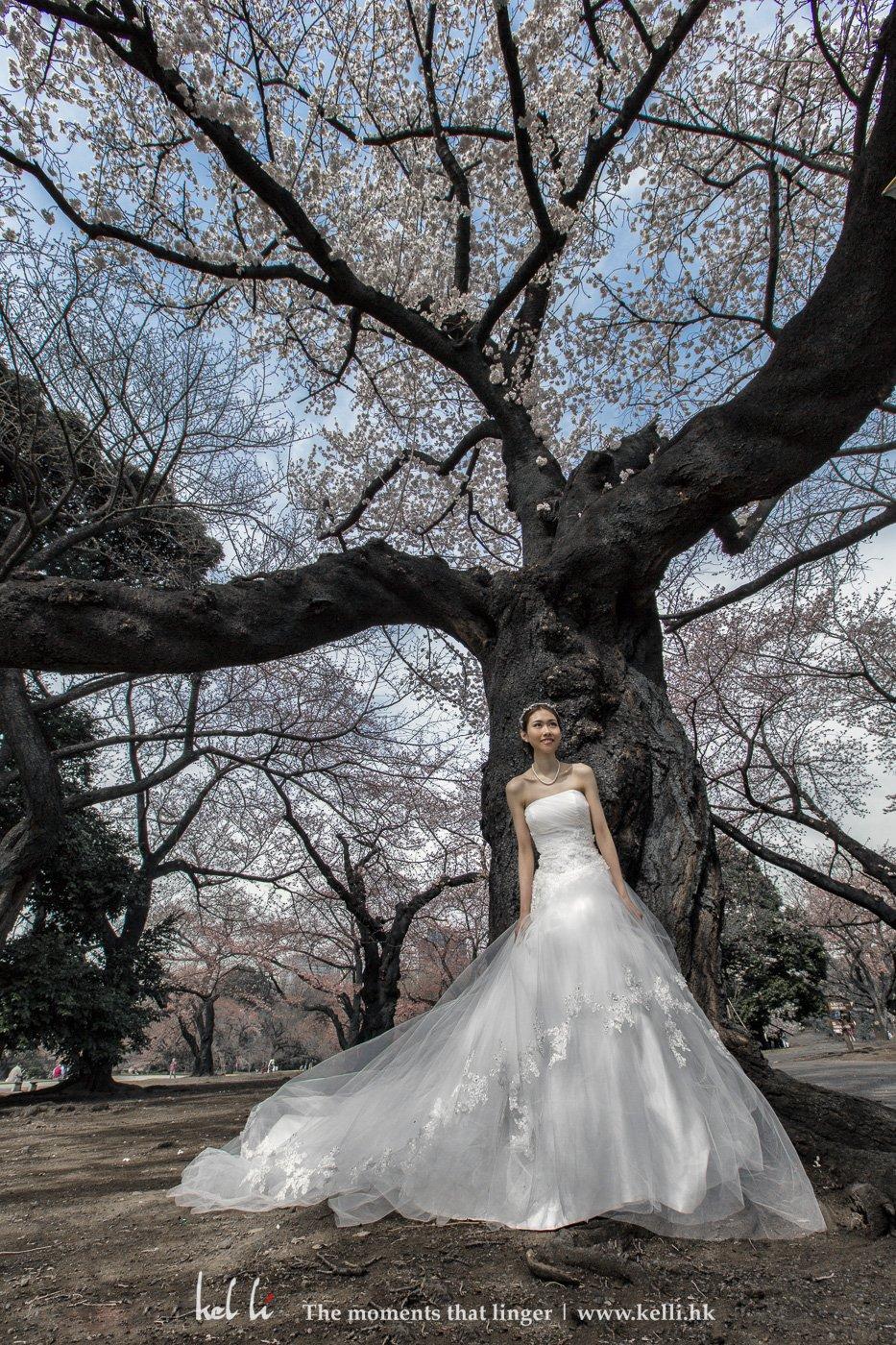 櫻花樹下的新娘,份外美麗