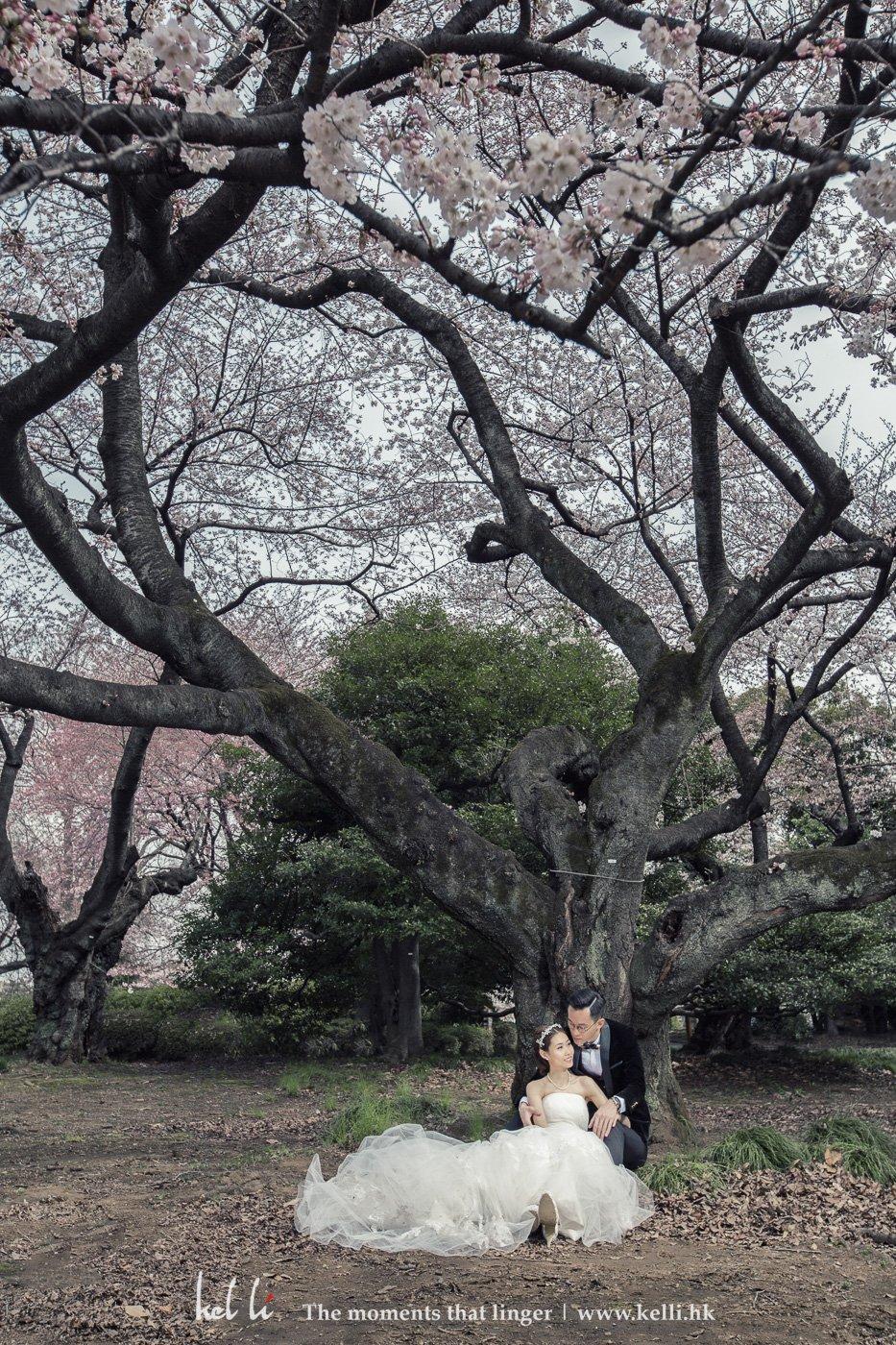 櫻花雖然是很漂亮,偶爾綠色的樹更顯舒服