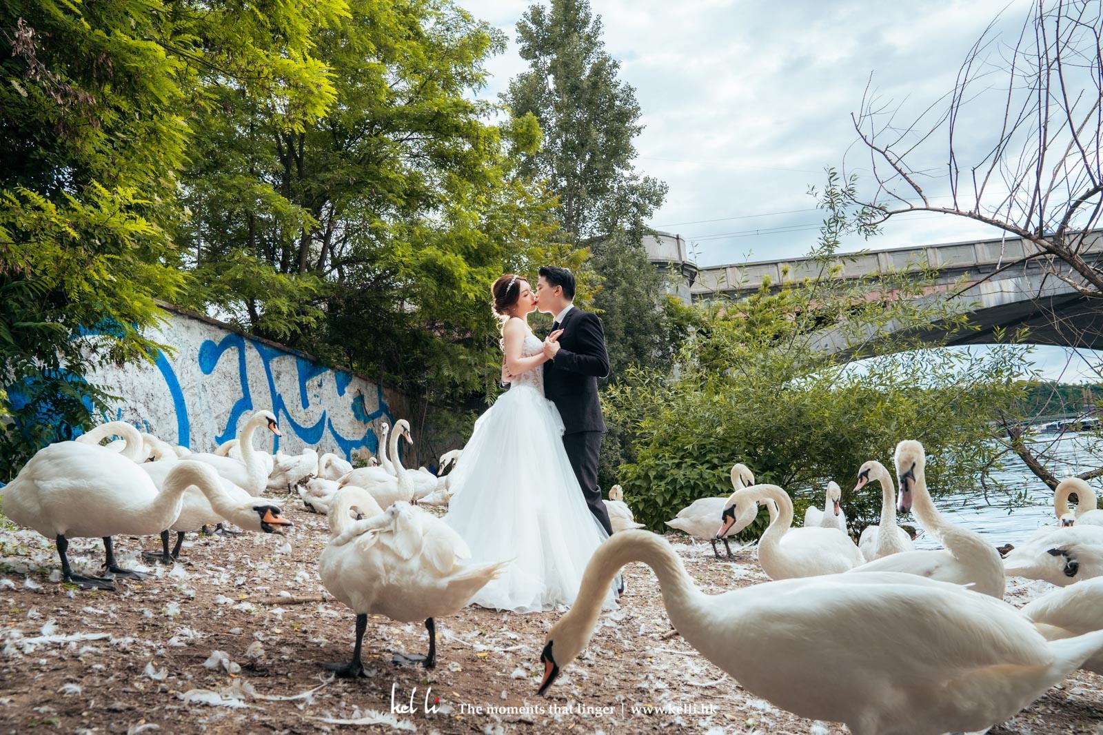 在布拉格 Prague與天鵝共舞