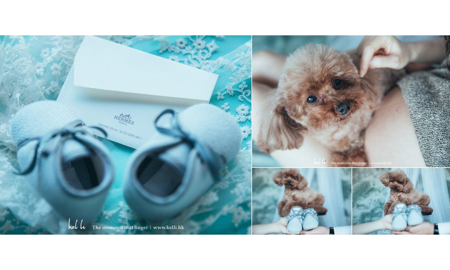 可愛的小狗和小鞋