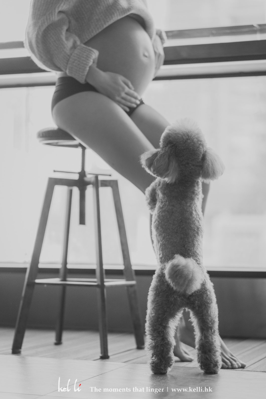 小狗狗看著懷孕媽媽,看著背影已覺得可愛